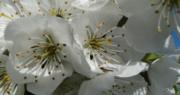 April: tuintips